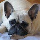 Rosey The French Bulldog by Cazzie Cathcart