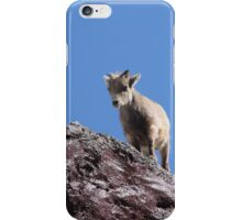 Babies- Springtime Rocky Mountain Sheep iPhone Case/Skin
