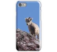 Babies- Springtime Rocky Mountain Sheep iPhone Case/Skin