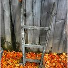 Leaf on a Dolly  by Wayne King