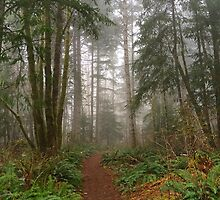 Elk Falls Forest Trails - Campbell River, British Columbia, Canada by Kimberley Bruce