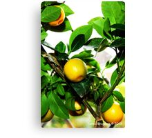 Exotic Fruit Tree Canvas Print