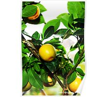 Exotic Fruit Tree Poster