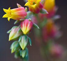 Happy Flowers.. by Sylvia Wu
