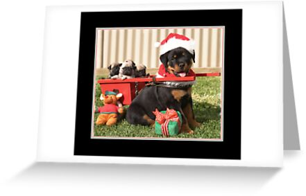 Puppy for Christmas by Margaret Metcalfe