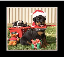 Puppy for Christmas Photographic Print