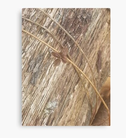Nature's Ribbon and Bow Canvas Print