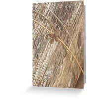 Nature's Ribbon and Bow Greeting Card