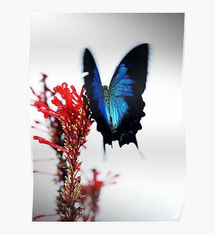 Flutterby Poster