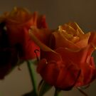 Peach colored roses by Arve Bettum