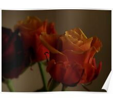 Peach colored roses Poster