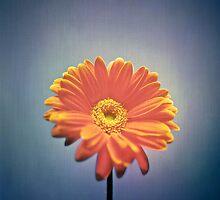 Classic Daisy by YoPedro
