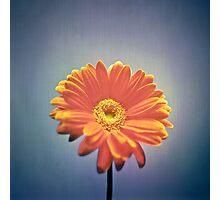 Classic Daisy Photographic Print