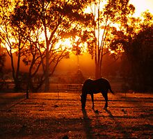 Sunset by Clive