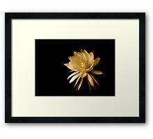 ~Queen of the Night (Cereus)~ Framed Print