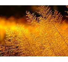 -Bushveld Grass- Photographic Print