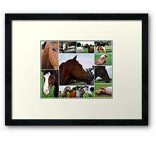 Collage Of Horses Framed Print