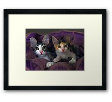 Kittens in a Purple Bed Framed Print
