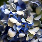 Carol's Blue Flowers by J.  Roberts