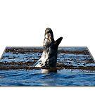 Seal yawning at Portnahaven 3D by Shaun Whiteman