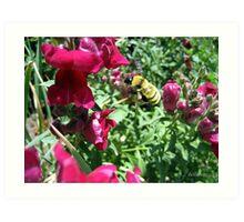 Flight Of the Bumble Bee Art Print