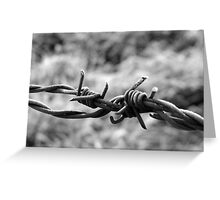 winter barbed wire Greeting Card