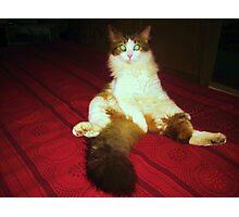 sitting tiger Photographic Print