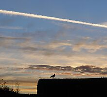A bird outlined against the setting sky at Dover Castle by ashishagarwal74