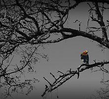 The Lookout by Voytek Swiderski