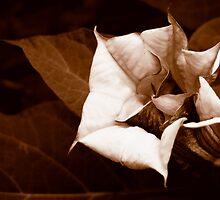 Night Bloom by olivia destandau