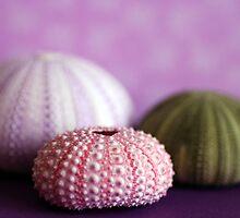 Trio of Urchins by DiEtte Henderson