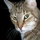 The Face of a Rescued Cat by Terri Chandler