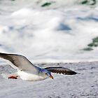 Skimming by Mike Stone