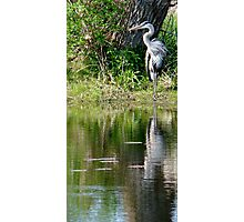 posing crane Photographic Print