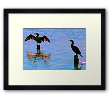 Spreading the Wings.. Anyone for a guess what kind of bird? solved it a cormorant Framed Print
