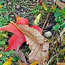 Leaves on a Bright Day by LeighAth