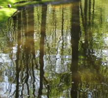 Tulip Reflections - Keukenhof Gardens, Holland Sticker