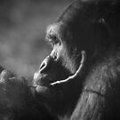 Gorilla by Jsprentallphoto