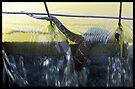 Fishing by Carla Wick/Jandelle Petters