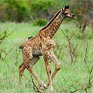 WAIT FOR ME - THE BABY GIRAFFE – Giraffa Camelopardalis (KAMEELPERD) by Magriet Meintjes