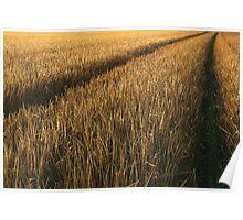 Wheat Tracks Poster