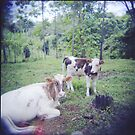 organic vanilla milk by Marina Starik