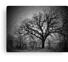 Old Timey Tree Canvas Print