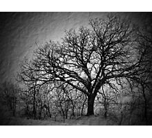 Old Timey Tree Photographic Print