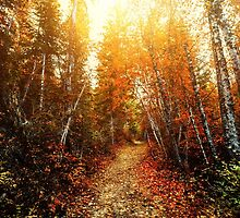 Red Forest, Washington in November by va103