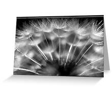 B&W Dandelion Greeting Card