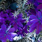 Purple Cacti by Rosalie Scanlon