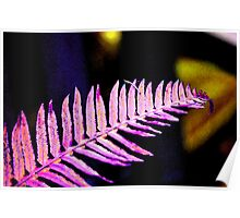 Pink Frond Poster