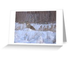 Quick Coyote Update Greeting Card
