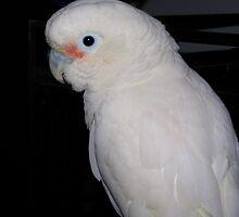 I'm a Pretty Bird by Robbyn4